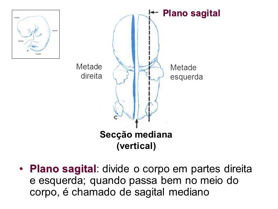 Secção mediana (vertical)