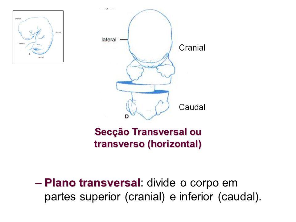 Secção Transversal ou transverso (horizontal)