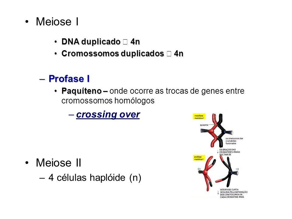 Meiose I Meiose II Profase I crossing over 4 células haplóide (n)