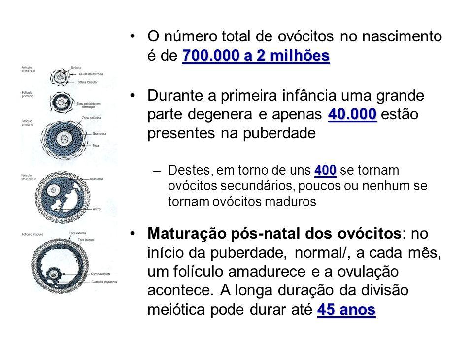 O número total de ovócitos no nascimento é de 700.000 a 2 milhões