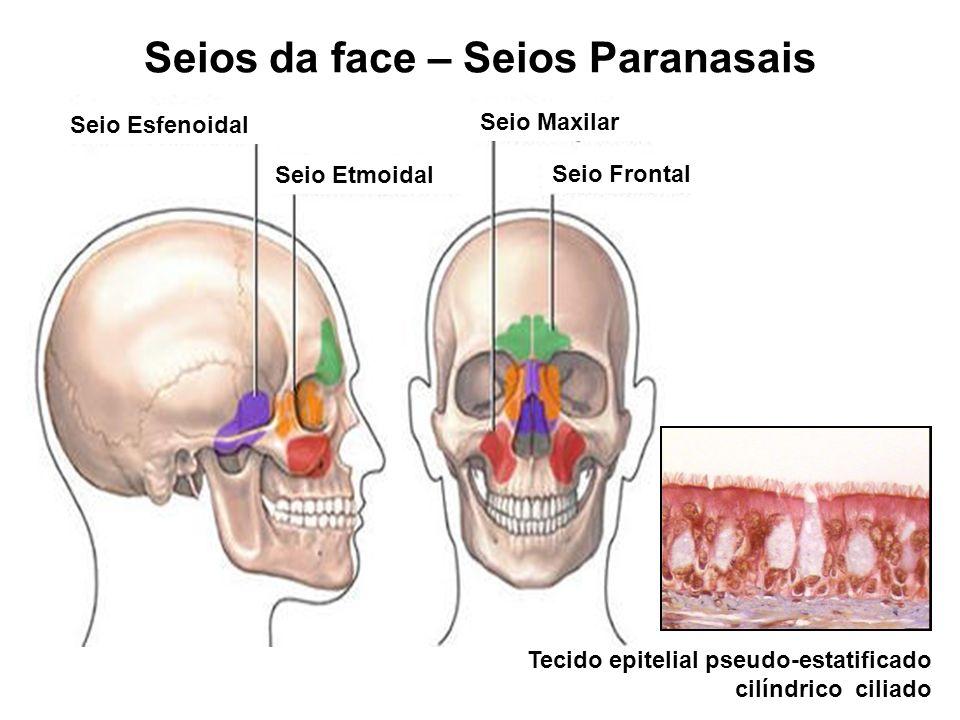 Seios da face – Seios Paranasais