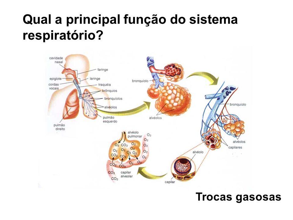 Qual a principal função do sistema respiratório