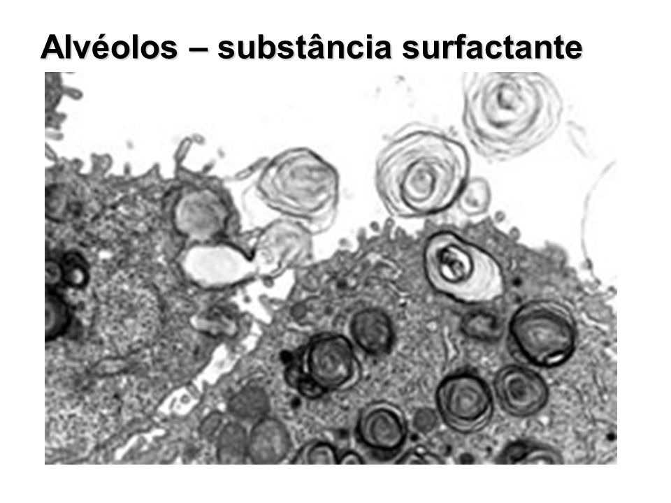 Alvéolos – substância surfactante