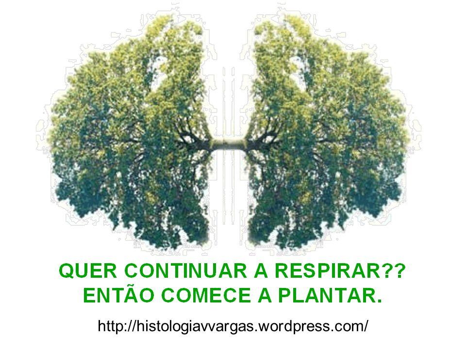 http://histologiavvargas.wordpress.com/