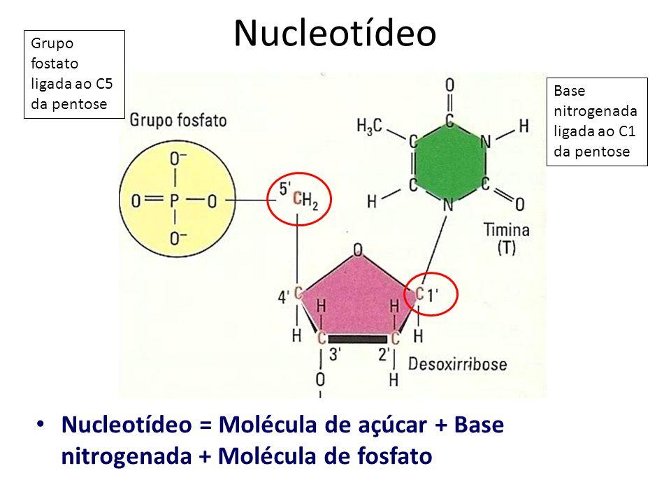Nucleotídeo Grupo fostato ligada ao C5 da pentose. Base nitrogenada ligada ao C1 da pentose.