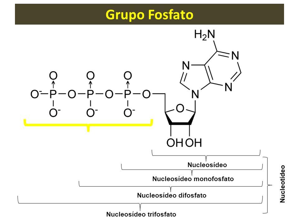 Nucleosídeo monofosfato Nucleosídeo difosfato Nucleosídeo trifosfato