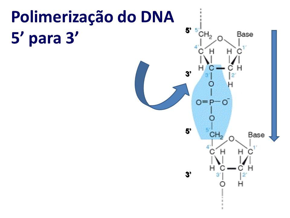 Polimerização do DNA 5' para 3'