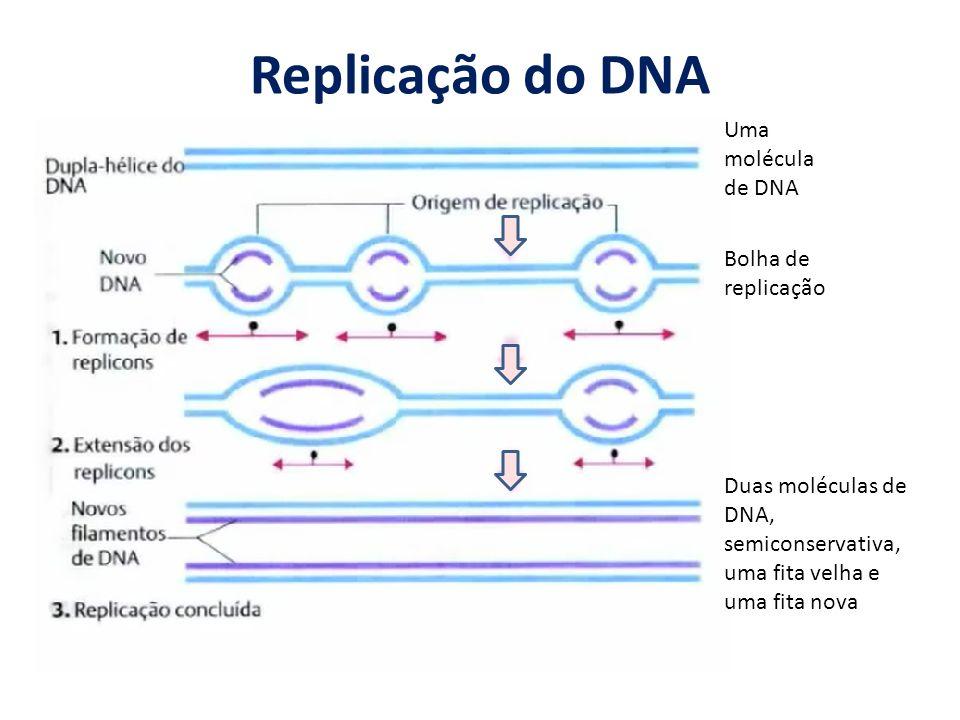 Replicação do DNA Uma molécula de DNA Bolha de replicação