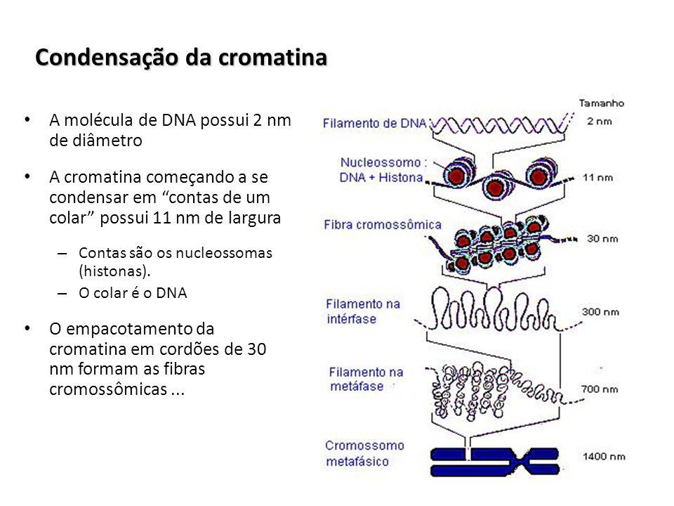 Condensação da cromatina