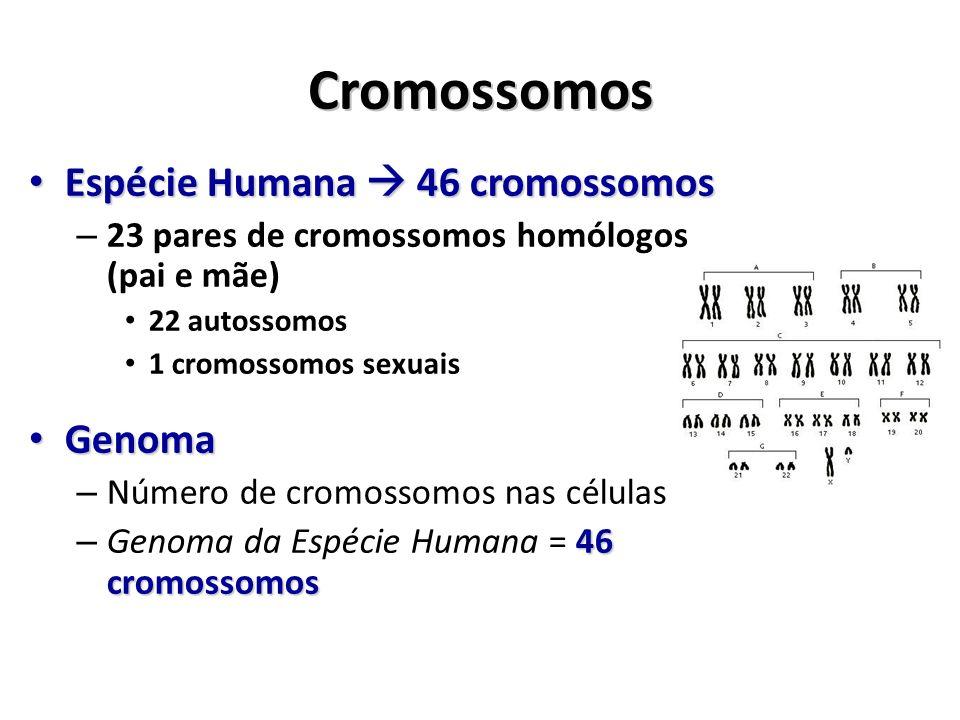 Cromossomos Espécie Humana  46 cromossomos Genoma