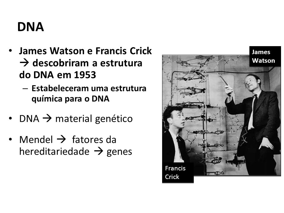 DNA James Watson e Francis Crick  descobriram a estrutura do DNA em 1953. Estabeleceram uma estrutura química para o DNA.
