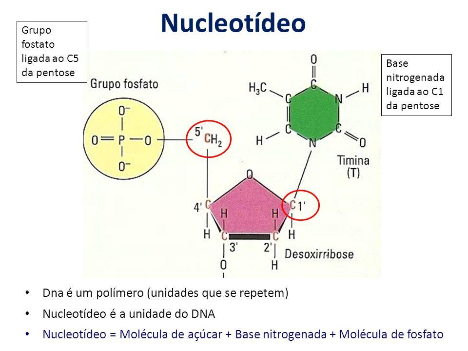 Nucleotídeo Dna é um polímero (unidades que se repetem)