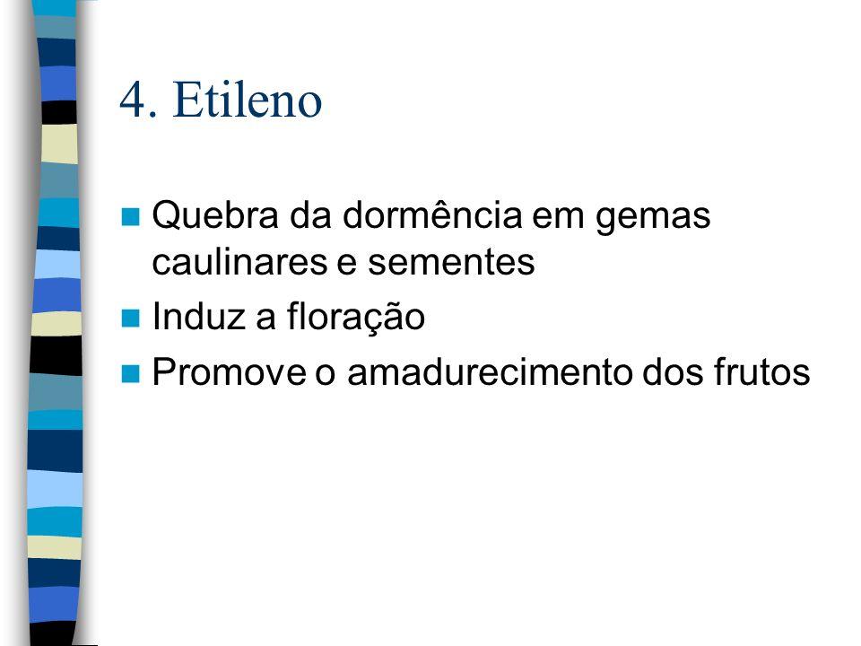 4. Etileno Quebra da dormência em gemas caulinares e sementes
