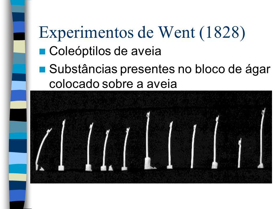 Experimentos de Went (1828)