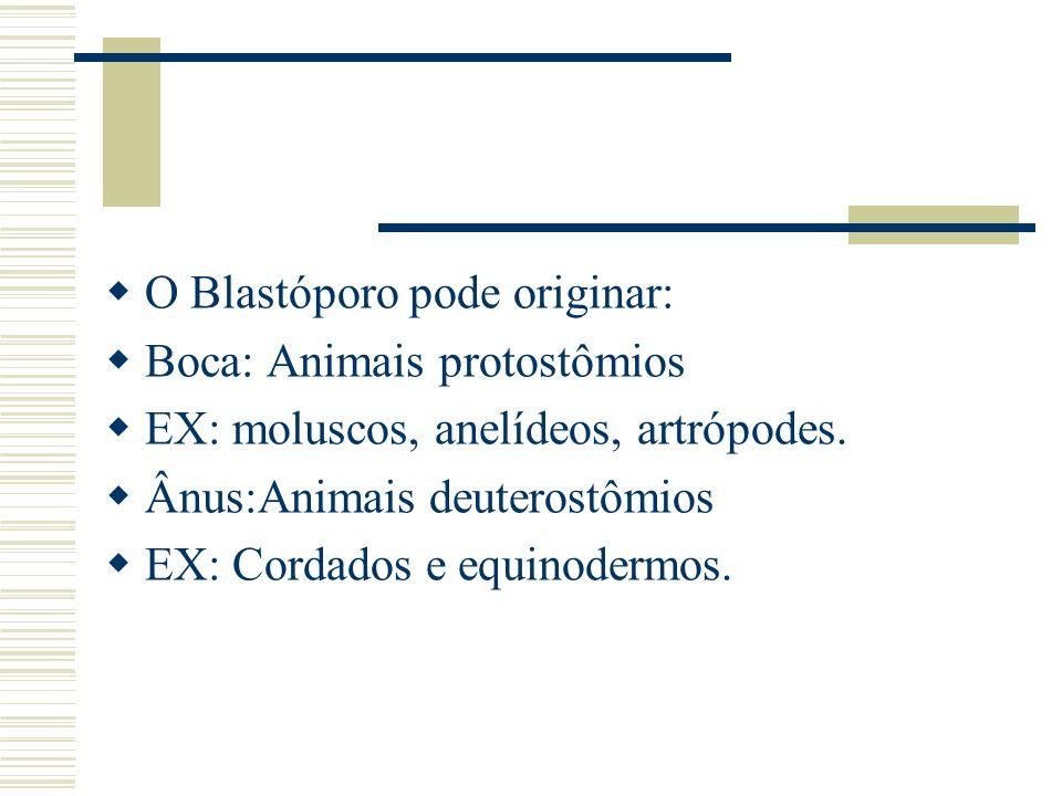 O Blastóporo pode originar: