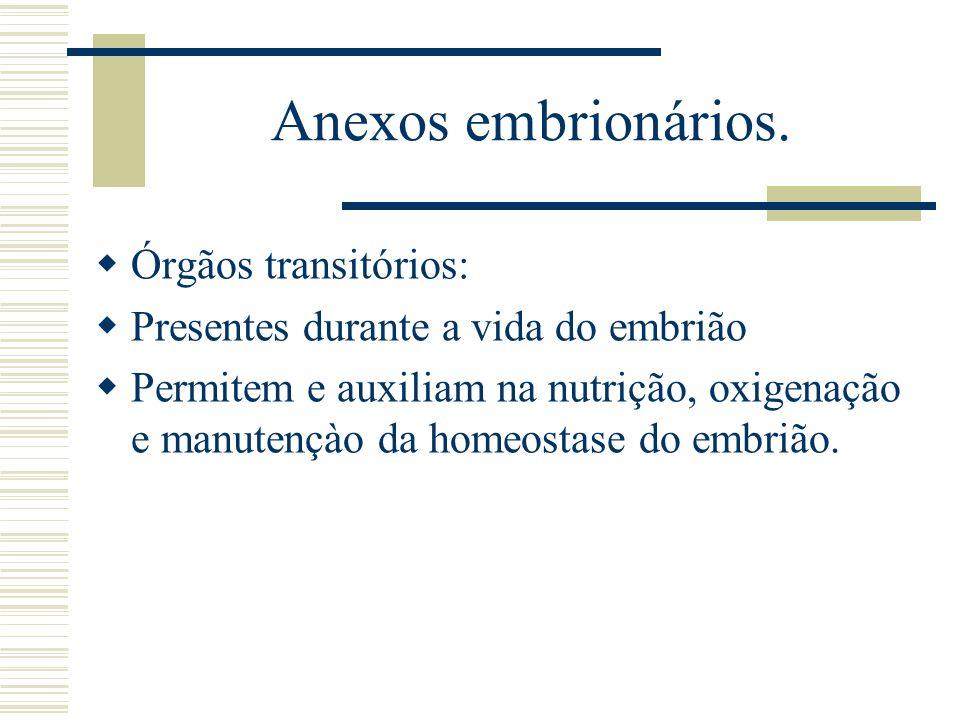 Anexos embrionários. Órgãos transitórios: