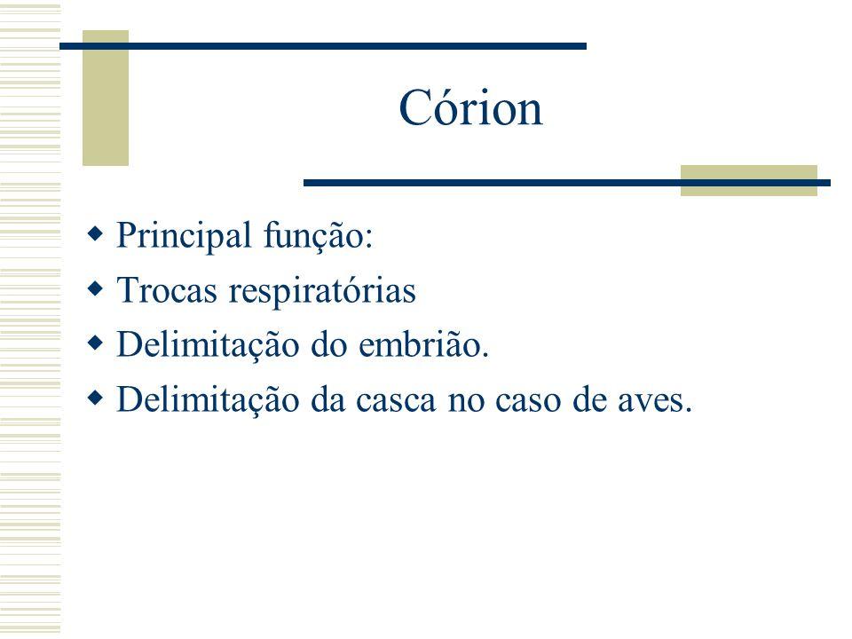 Córion Principal função: Trocas respiratórias Delimitação do embrião.