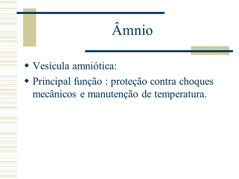 Âmnio Vesícula amniótica: