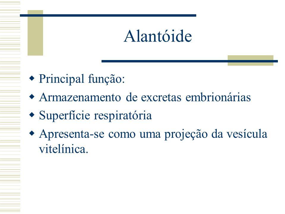 Alantóide Principal função: Armazenamento de excretas embrionárias