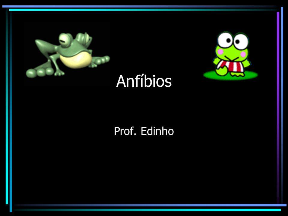 Anfíbios Prof. Edinho
