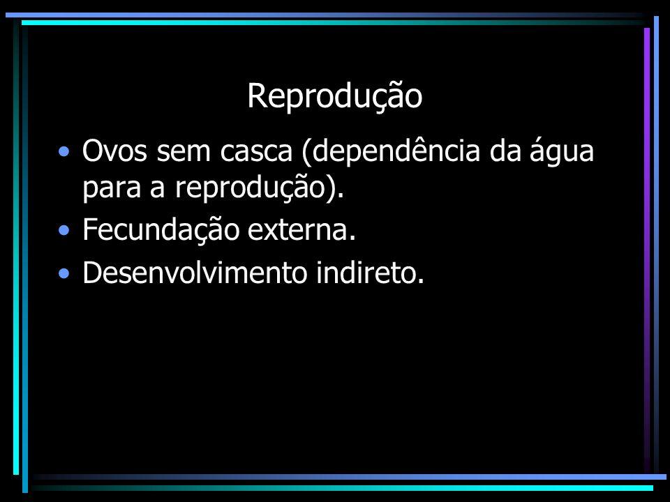Reprodução Ovos sem casca (dependência da água para a reprodução).