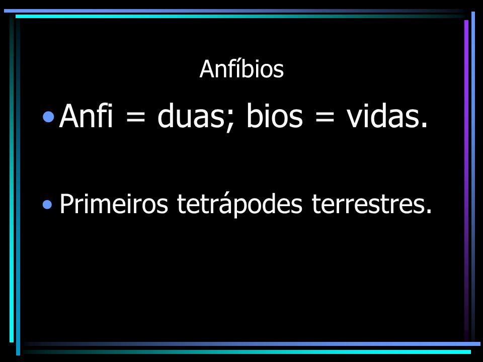 Anfi = duas; bios = vidas.