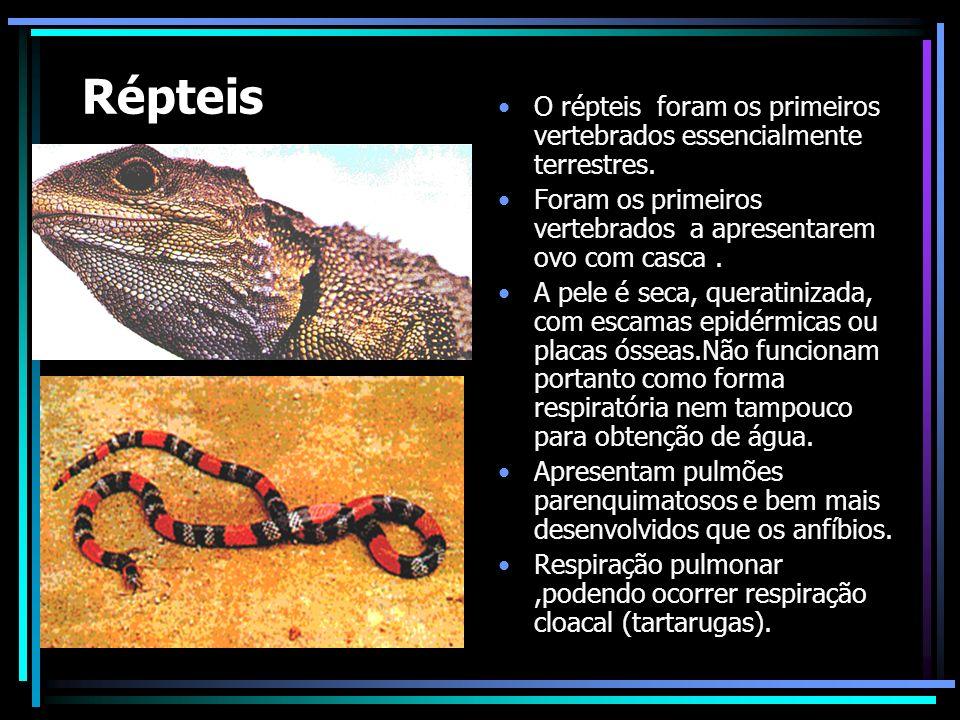 Répteis O répteis foram os primeiros vertebrados essencialmente terrestres. Foram os primeiros vertebrados a apresentarem ovo com casca .