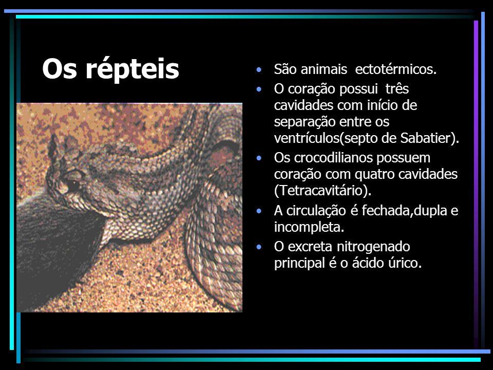 Os répteis São animais ectotérmicos.