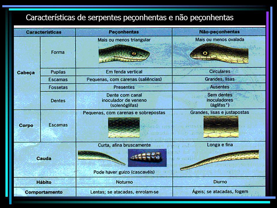 Características de serpentes peçonhentas e não peçonhentas