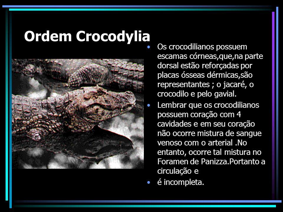 Ordem Crocodylia