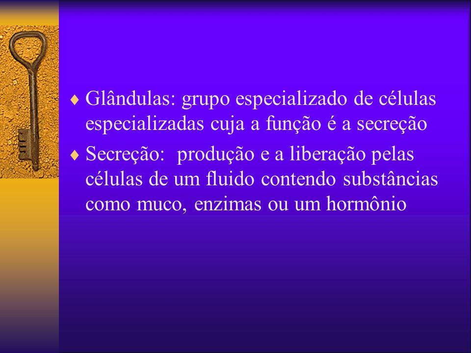 Glândulas: grupo especializado de células especializadas cuja a função é a secreção