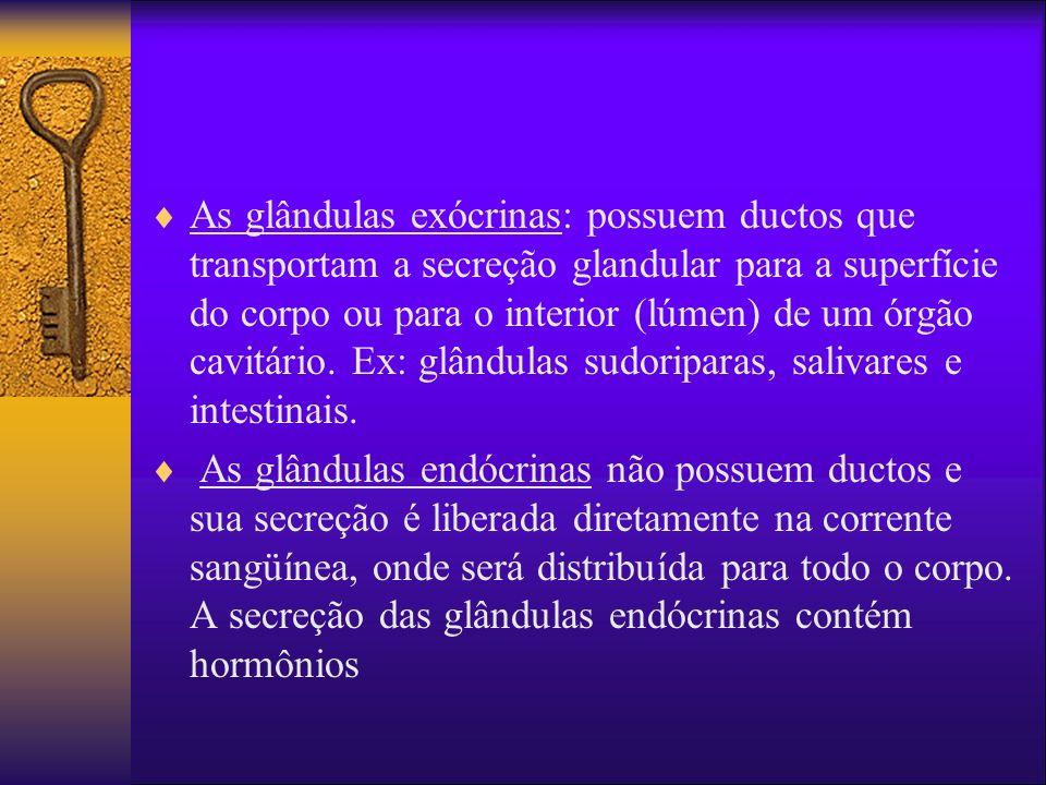 As glândulas exócrinas: possuem ductos que transportam a secreção glandular para a superfície do corpo ou para o interior (lúmen) de um órgão cavitário. Ex: glândulas sudoriparas, salivares e intestinais.