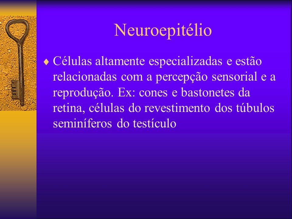 Neuroepitélio