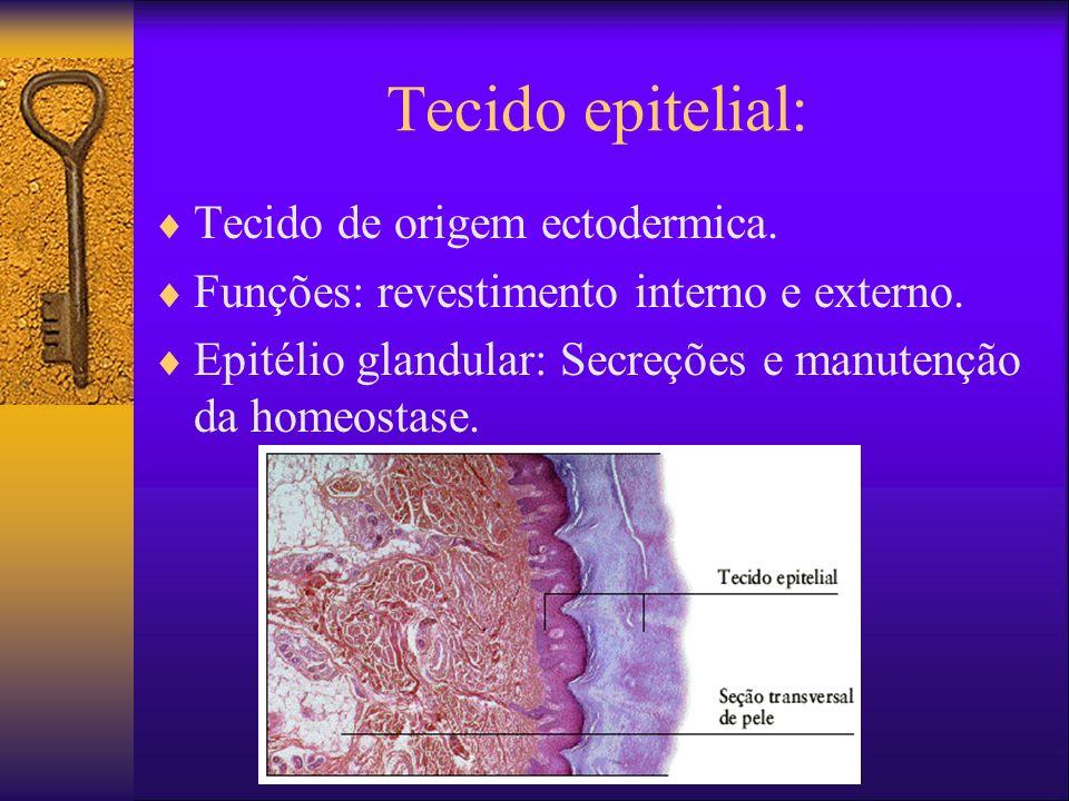 Tecido epitelial: Tecido de origem ectodermica.