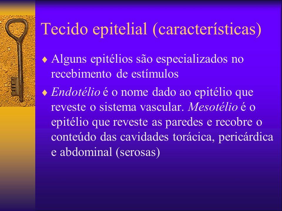 Tecido epitelial (características)