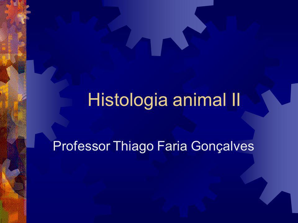 Professor Thiago Faria Gonçalves