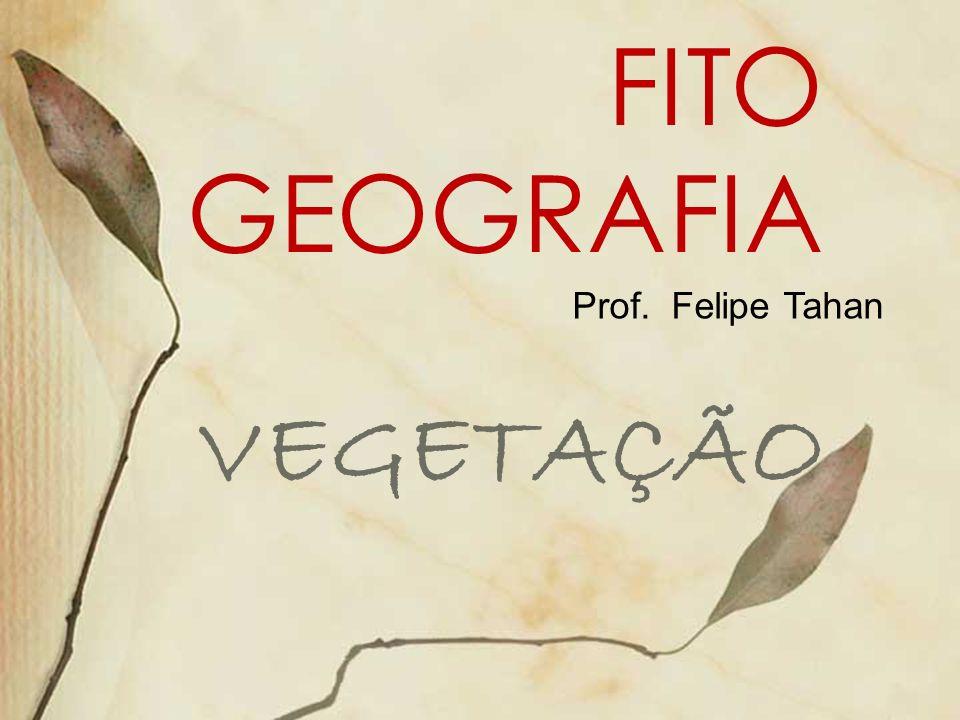 FITO GEOGRAFIA VEGETAÇÃO