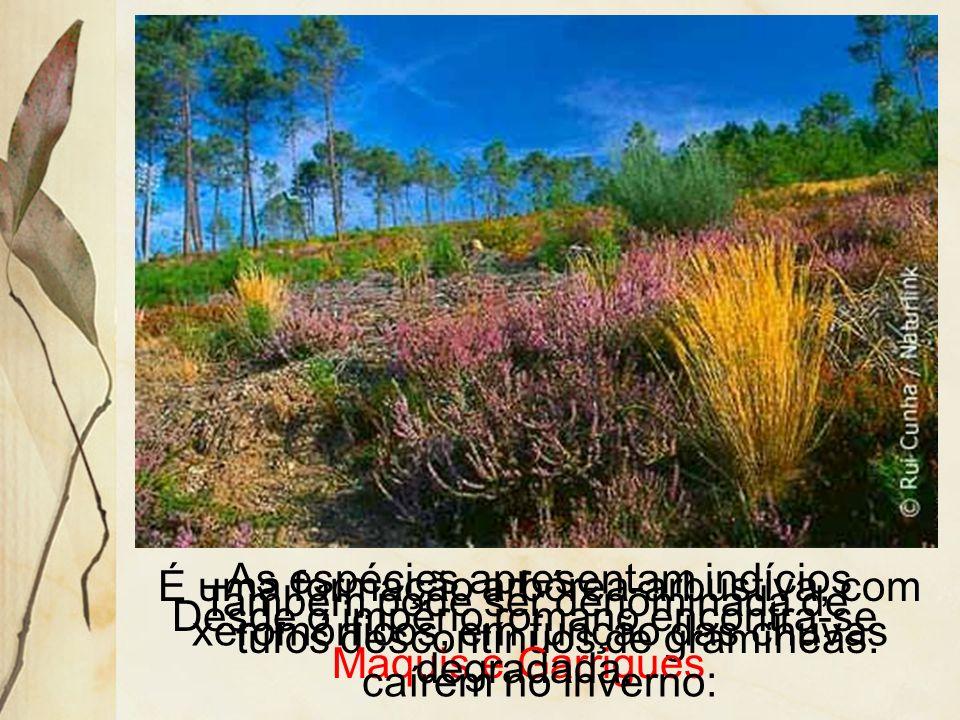 É uma formação arbórea-arbustiva, com tufos descontínuos de gramíneas.