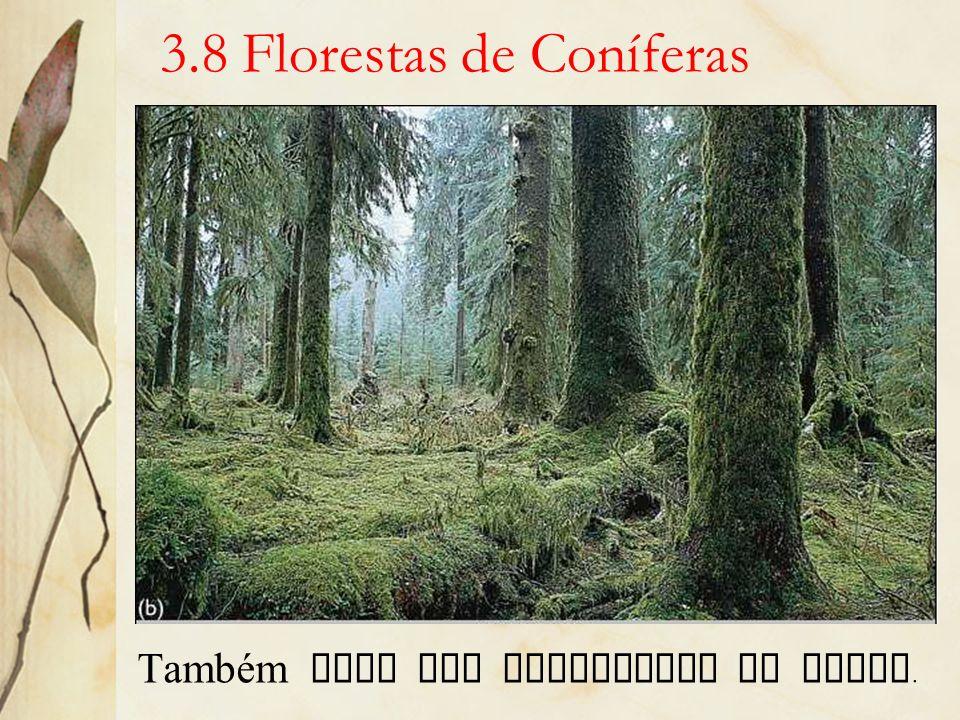 3.8 Florestas de Coníferas