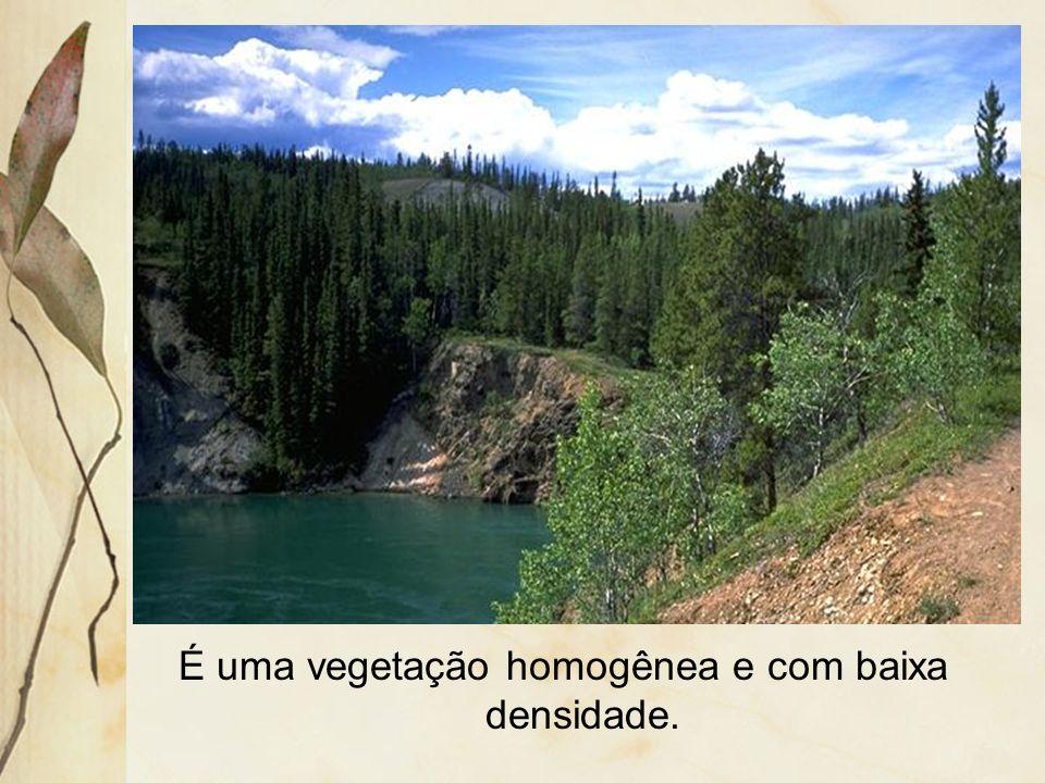 É uma vegetação homogênea e com baixa densidade.
