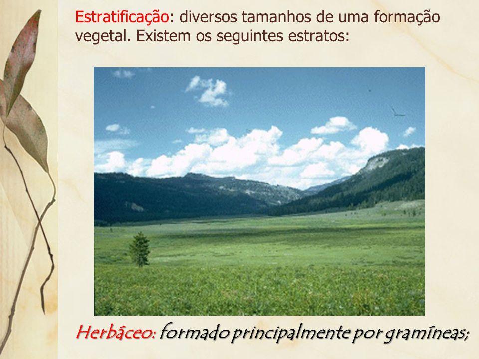 Herbáceo: formado principalmente por gramíneas;