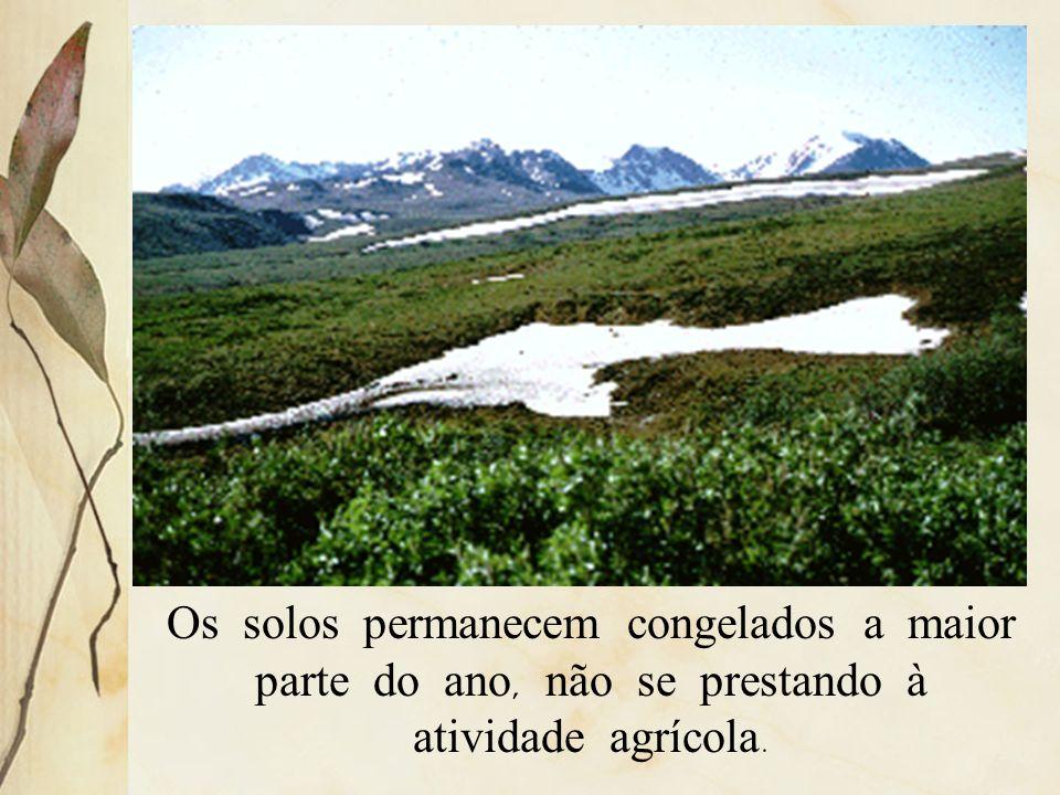 Os solos permanecem congelados a maior parte do ano, não se prestando à atividade agrícola.