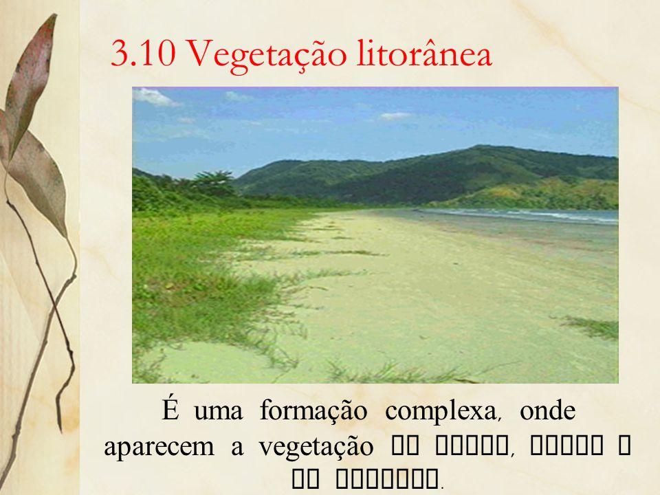 3.10 Vegetação litorâneaÉ uma formação complexa, onde aparecem a vegetação de praia, dunas e de mangues.