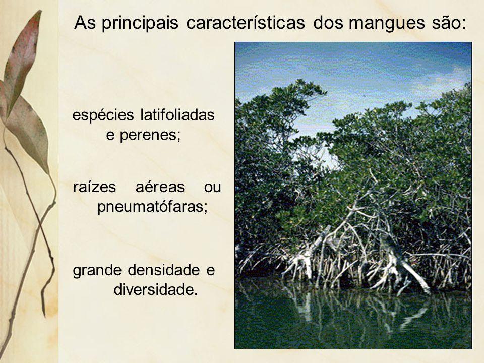 As principais características dos mangues são:
