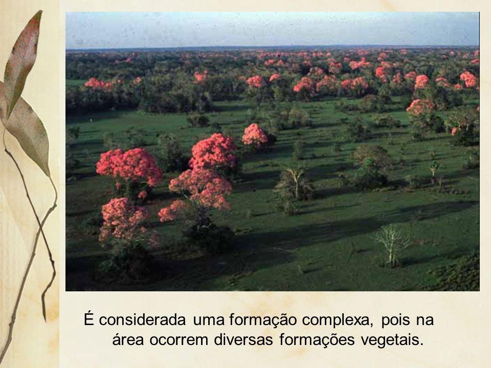É considerada uma formação complexa, pois na área ocorrem diversas formações vegetais.