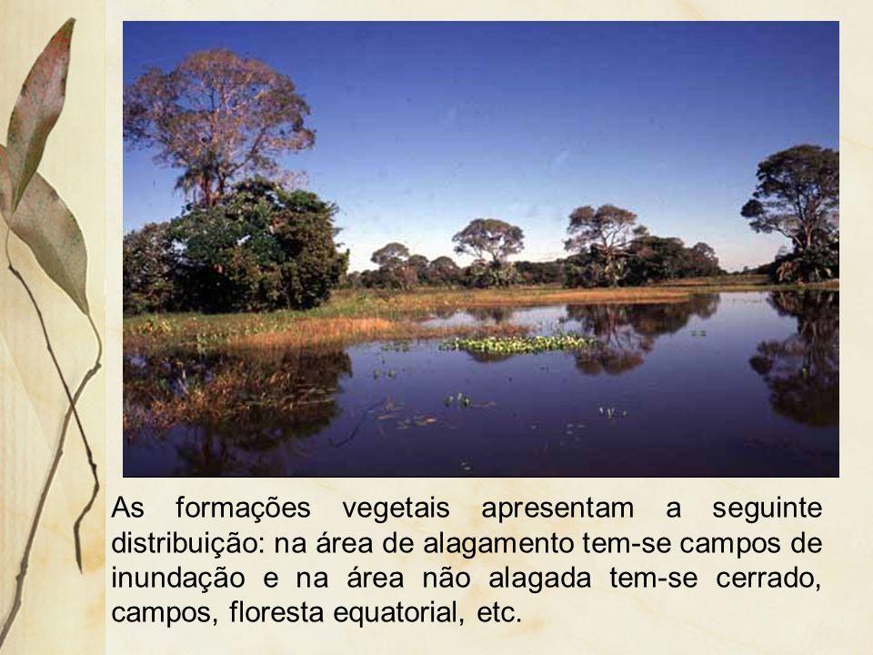 As formações vegetais apresentam a seguinte distribuição: na área de alagamento tem-se campos de inundação e na área não alagada tem-se cerrado, campos, floresta equatorial, etc.