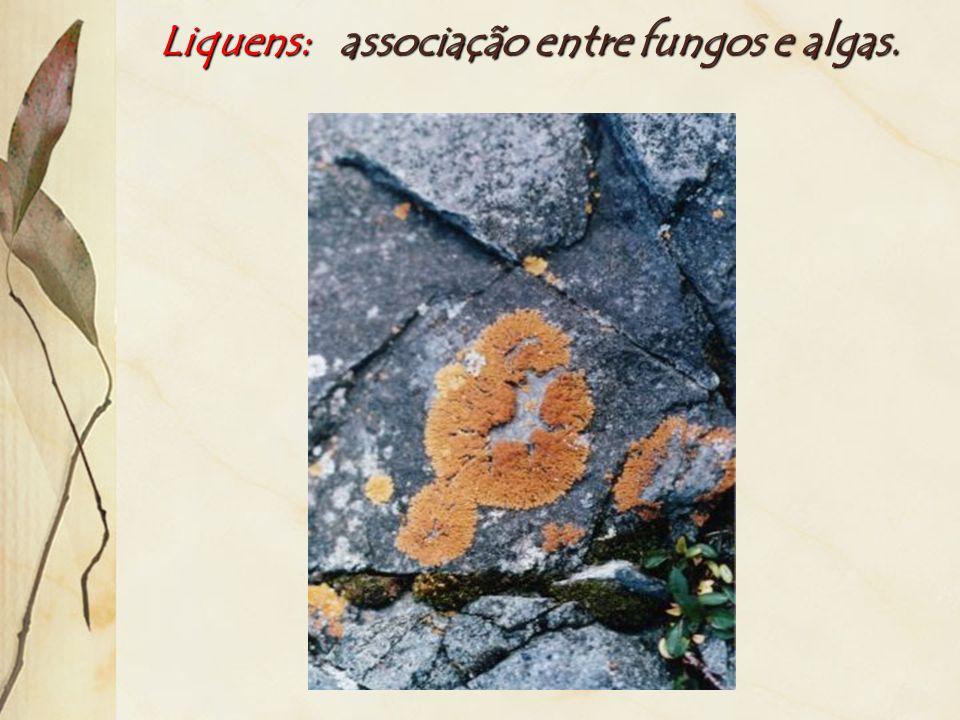 Liquens: associação entre fungos e algas.