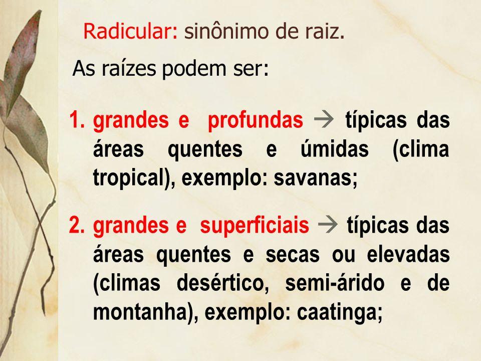 Radicular: sinônimo de raiz.