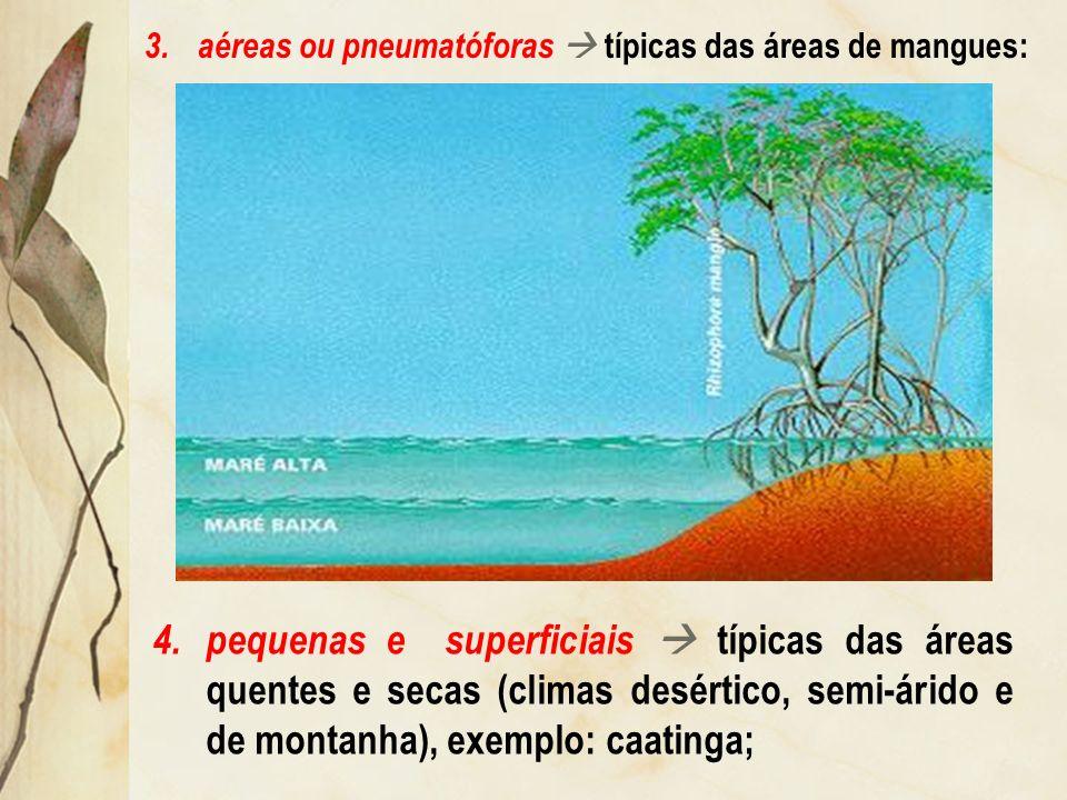 aéreas ou pneumatóforas  típicas das áreas de mangues: