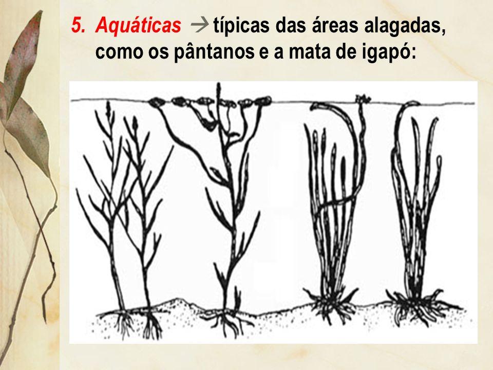 Aquáticas  típicas das áreas alagadas, como os pântanos e a mata de igapó: